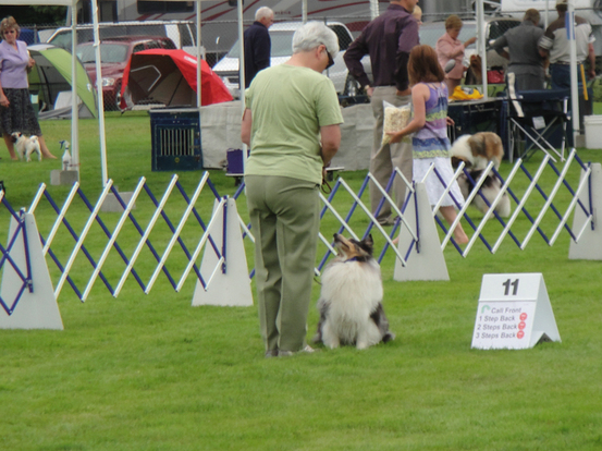 Conformation Dog Show Handling Classes